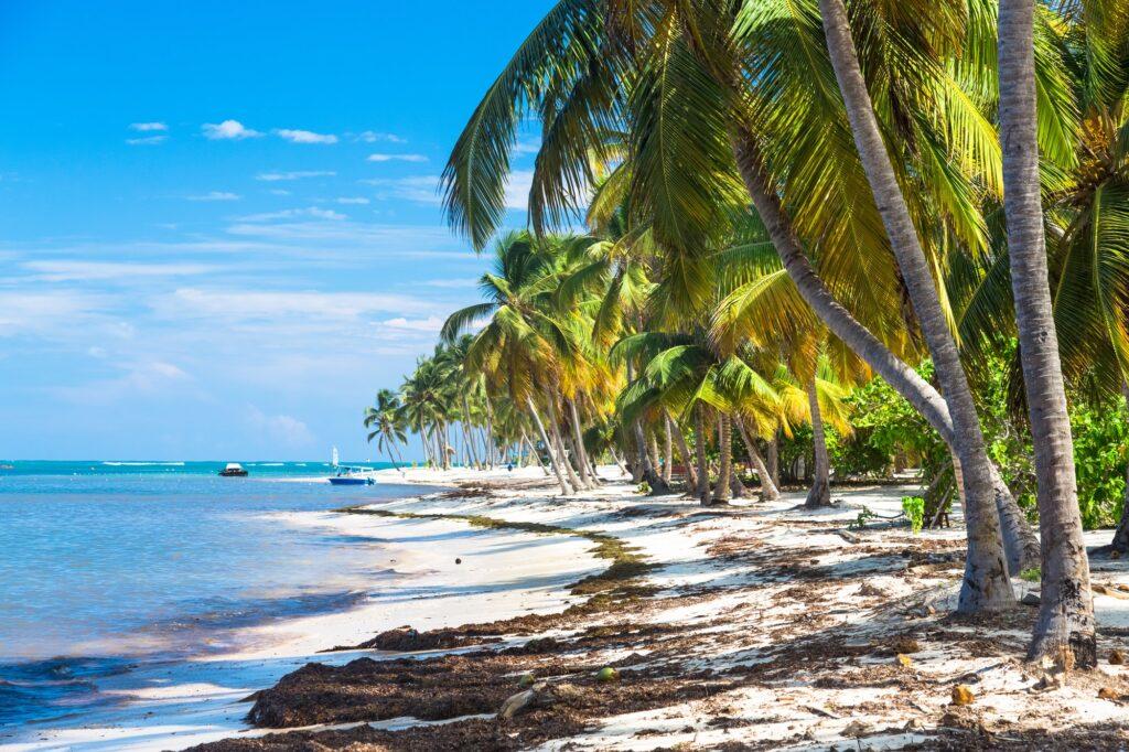Many coconut palms on the wild carribean beach, Atlantic ocean, Dominican Republic